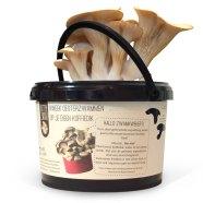 rotterzwam-growkit-oesterzwammen-kweken